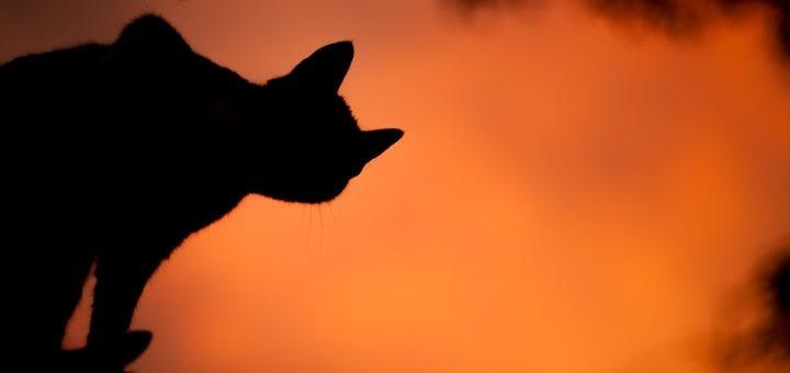 Cat Mystery Ringtone