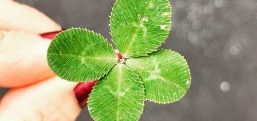 Four Leaf Clover Ringtone